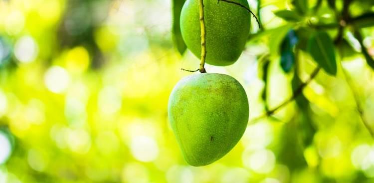 Health Benefits of African Mango