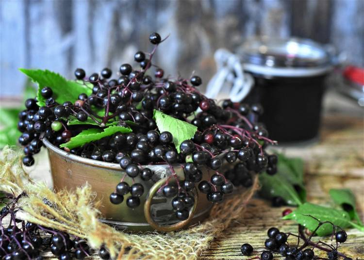 The Immune-Boosting Properties of Elderberry