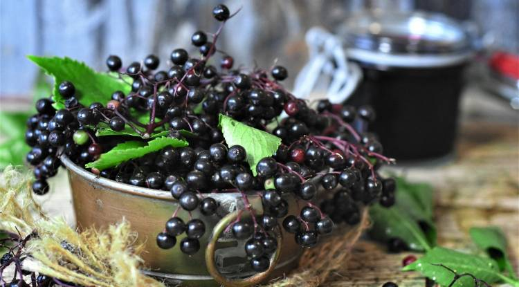 The Immune-Boosting Properties of Elderberry
