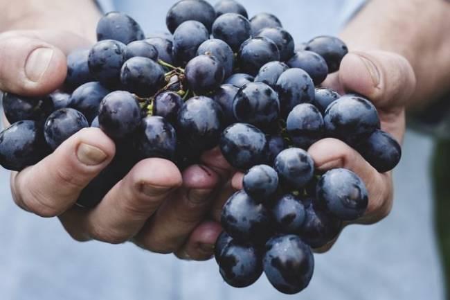 The Alkaline Diet Explained