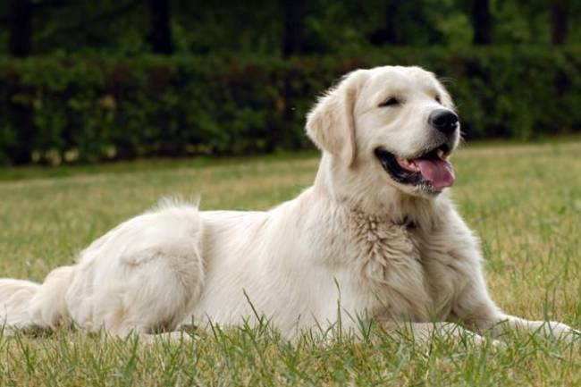 Common Skin Problems in Dogs & Their Remedies