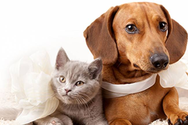 How to Boost your Pet's Immune System