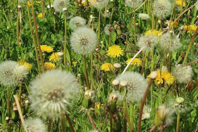 Managing Your Allergies