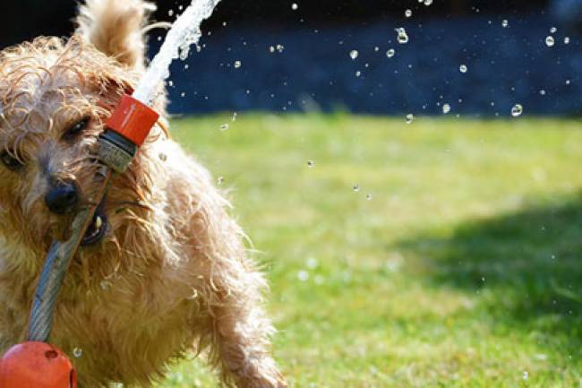 Keep your Pets Healthy and Happy this Summer