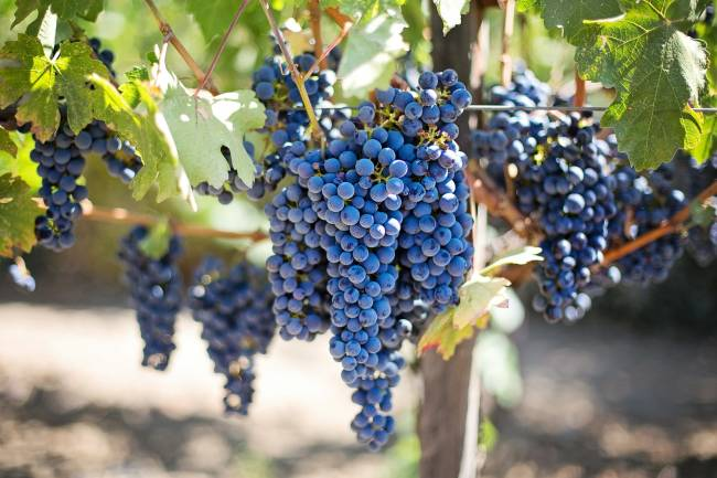 The Benefits of Grape Seed Extract for Your Skin