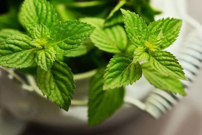 How to Use Peppermint for Bloating